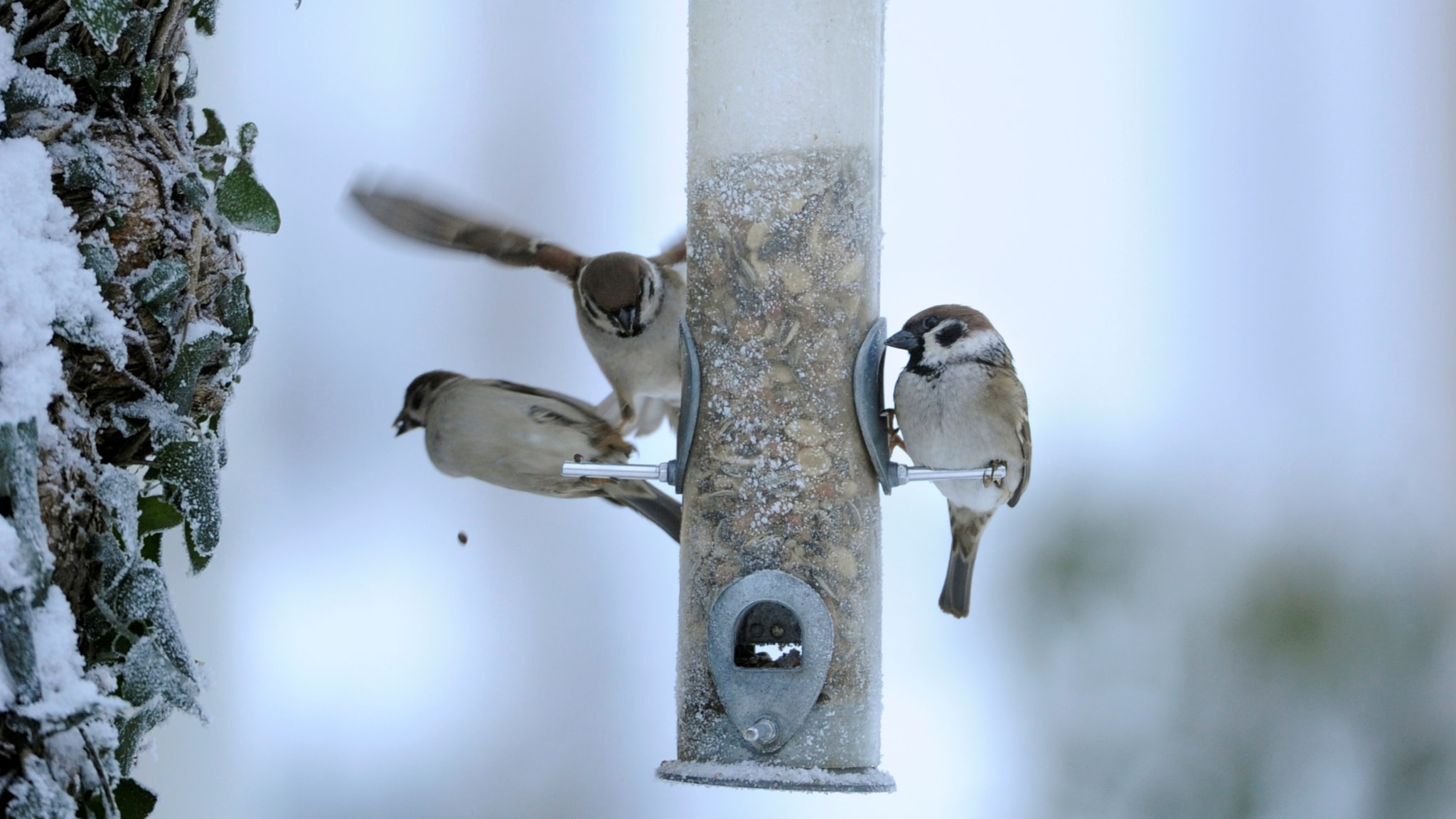 Lintuhavaintoja
