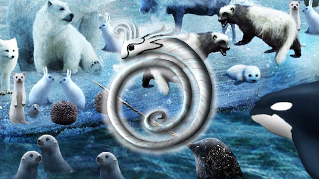 Hitta djuret med Sillkungen-smycket. (illustrationer: Alexander Janson/Sveriges Radio)