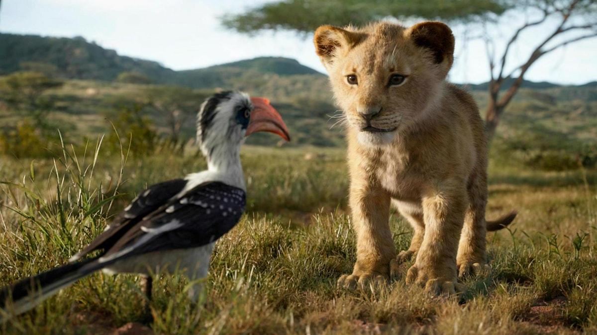 Lilla simba står mitt emot en fågel.