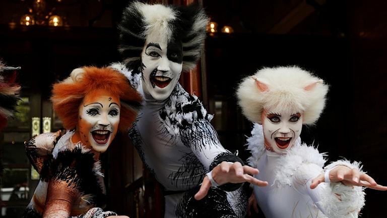 Musikalen CATS kommer till Sverige