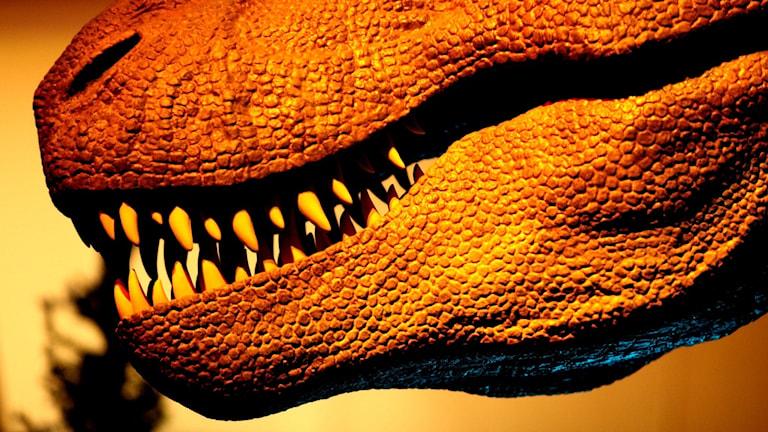 Närbild på munnen på en T-rex.