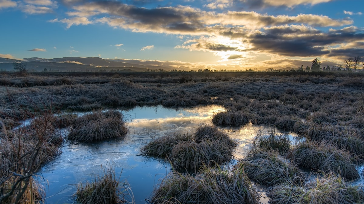 Soluppgång en kall morgon över en sankmark.