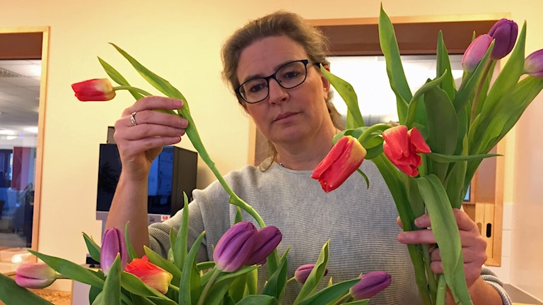 Pernilla Eskilsdotter plockar med en bukett olikfärgade tulpaner.