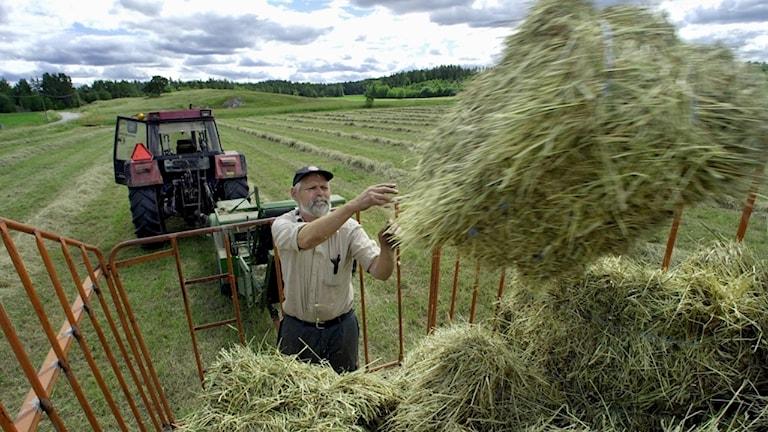 En bonde kastar upp höbal i en skrinda.