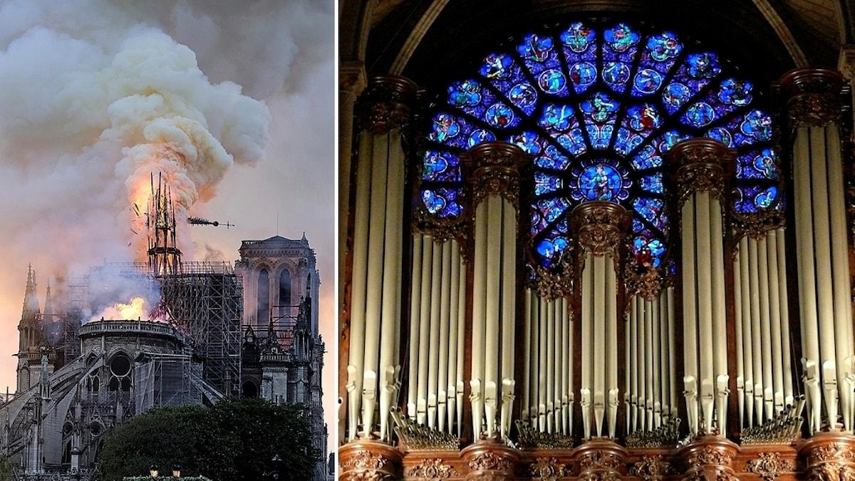 En bild på den fallande spiran på det brinnande Notre Dame och en bild på den stora orgeln och dess pipor på insidan av katedralen innan branden.