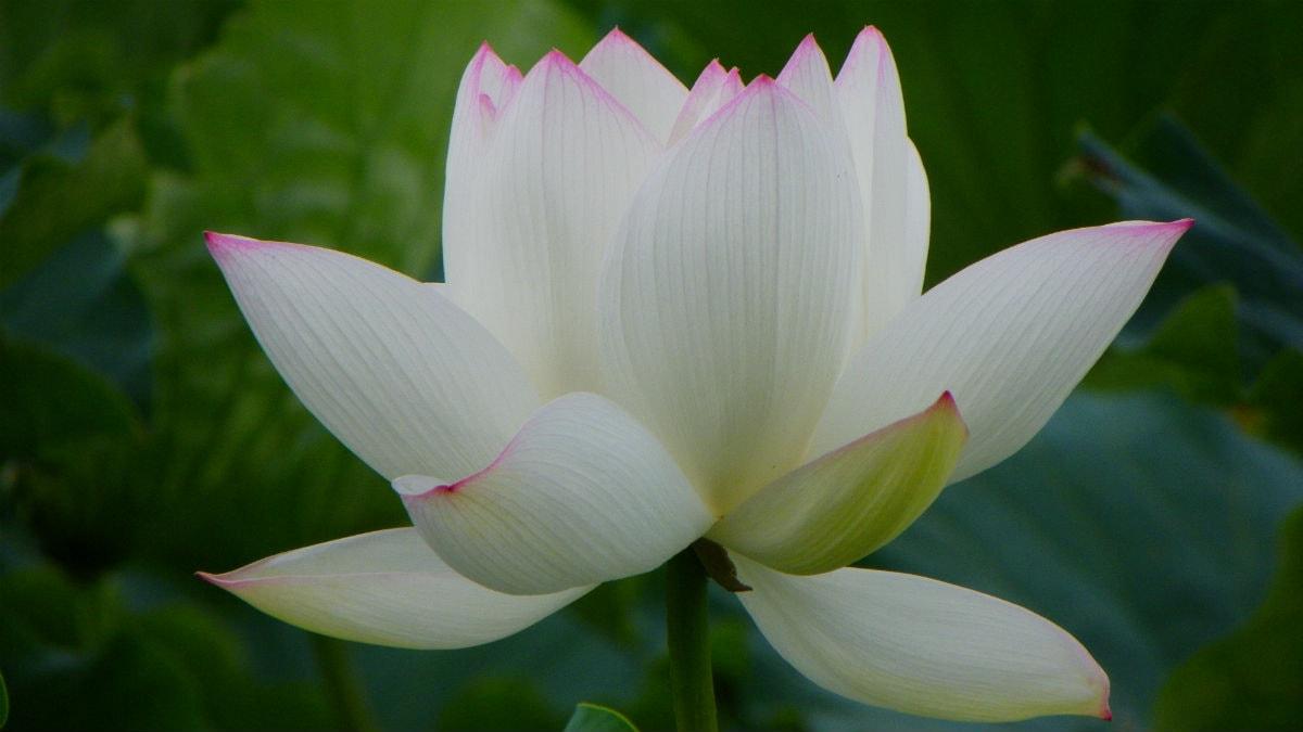 Blommornas vals, Marlowe's Theme och Nirvanas In Bloom med Aysedeniz Gökcin