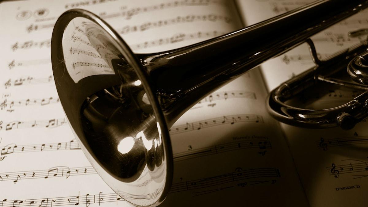 Trumpet Macro. Foto: Jameziecakes, cc-by, flickr, http://bit.ly/1xRssnP,  http://bit.ly/LicensEN