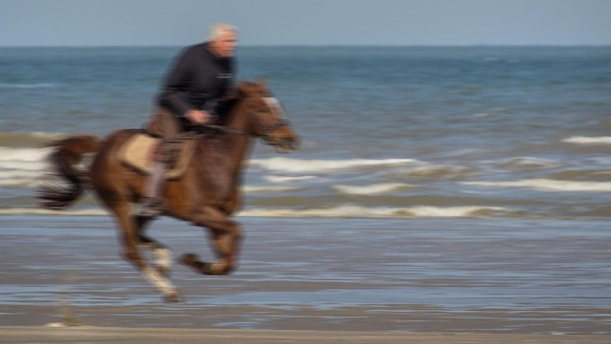 Häst och ryttare som galopperar i vattenbrynet på en strand.