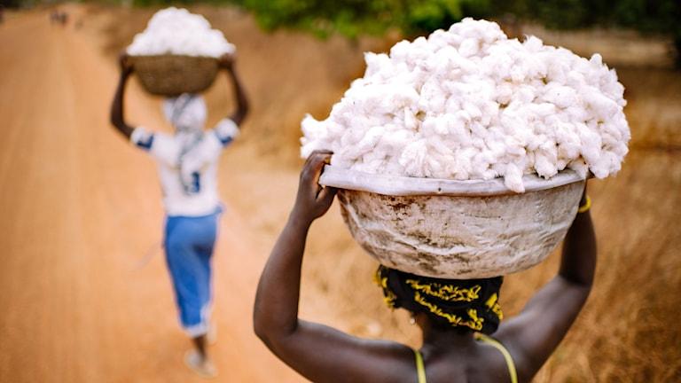 Två kvinnor som bär varsin korg full med nyskördad bomull.