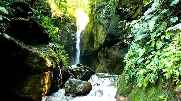 Vattenfall i regnskog.