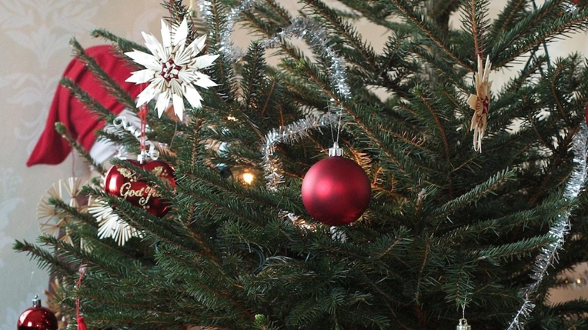 Närbild på julgran med färgglada kulor i.