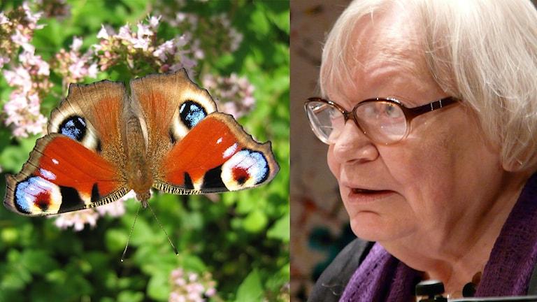 Fjäril och Inger Christensen