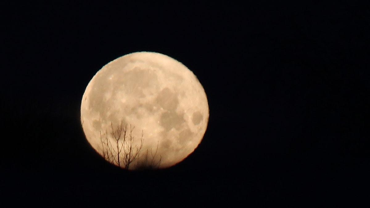 Fullmåne mot svart himmel