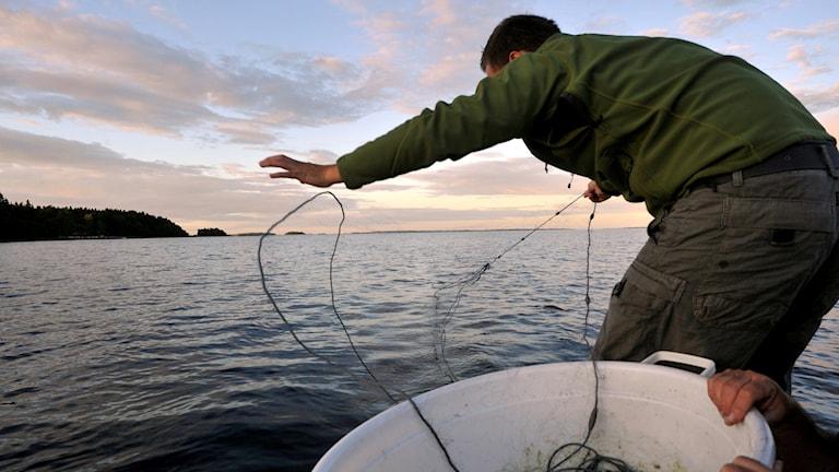En man lägger ut ett fiskenät från en båt.