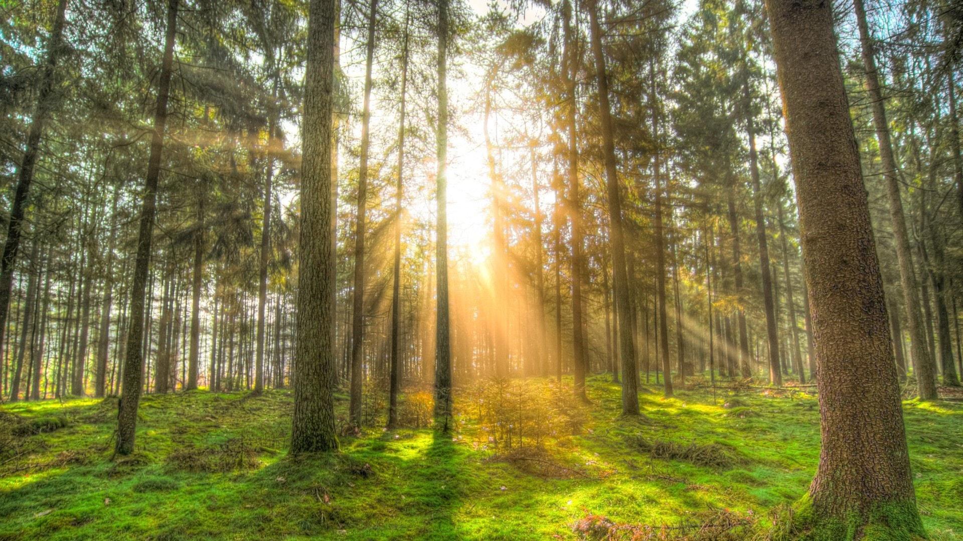 Klassisk morgon - Skogssol och Paradis