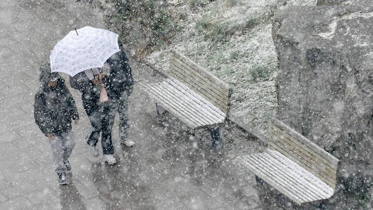 Tre människor går under ett paraply i snöoväder i maj.