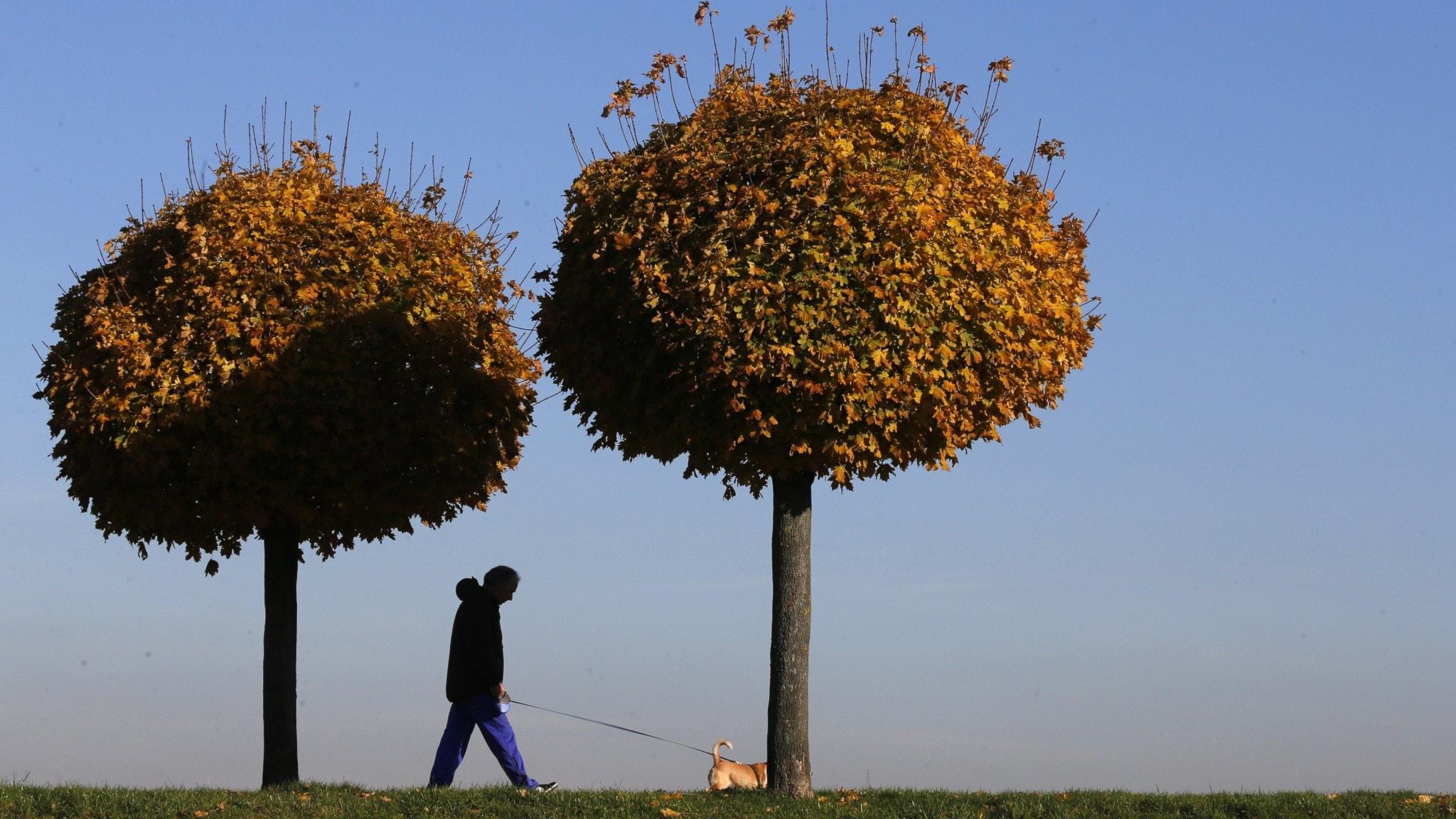 Klassisk morgon - Two Trees av Einaudi, Aftonklockor och Hans Zimmers Solomon