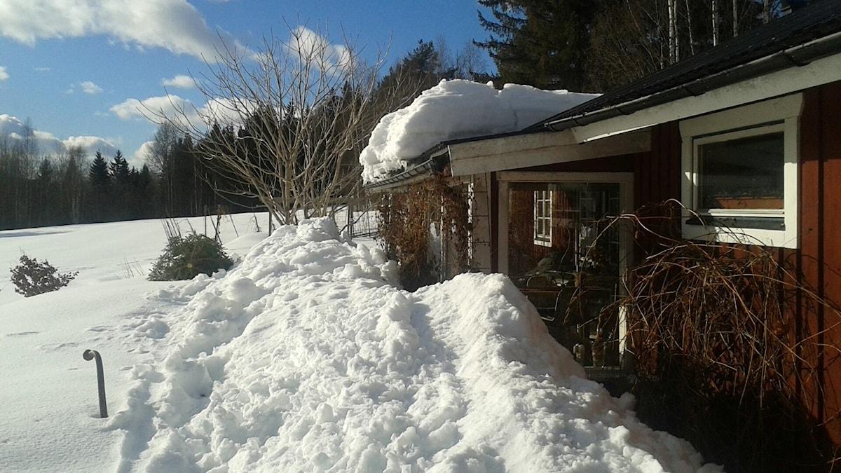 Stuga där snön rasar från taket i vårsolen som värmer.