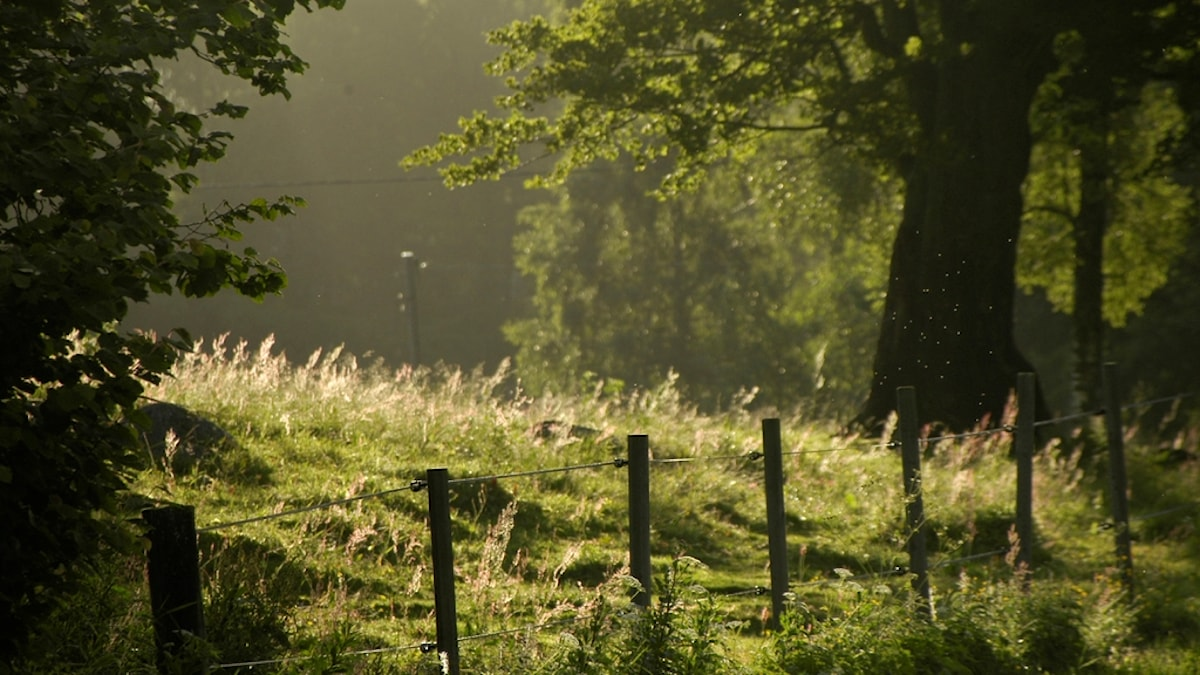 Solbelyst sommarhage med gräs, träd och ett stängsel.