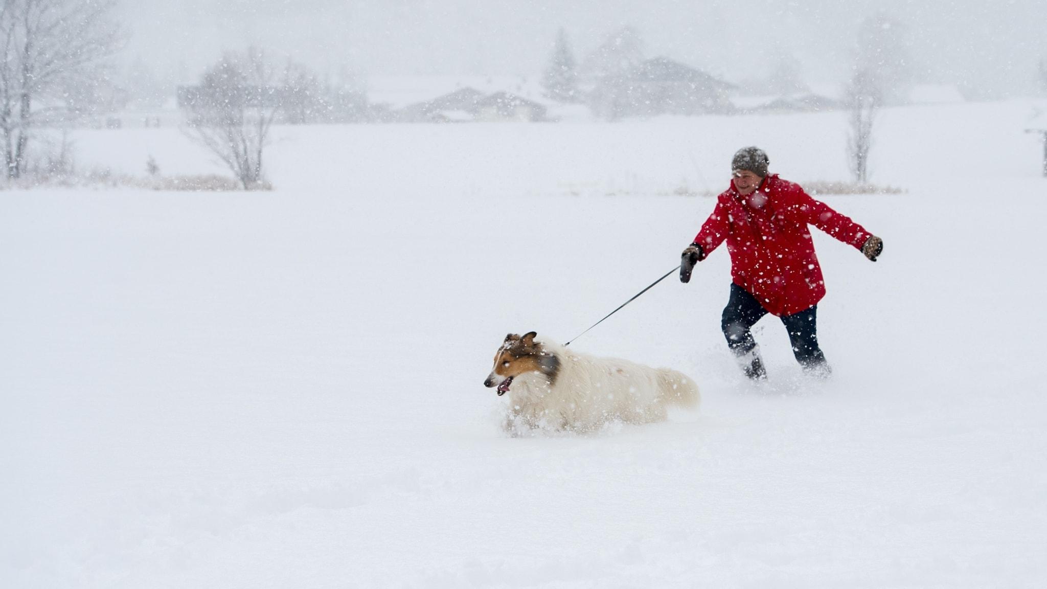 Kvinna och hund ute på promenad i djup snö.