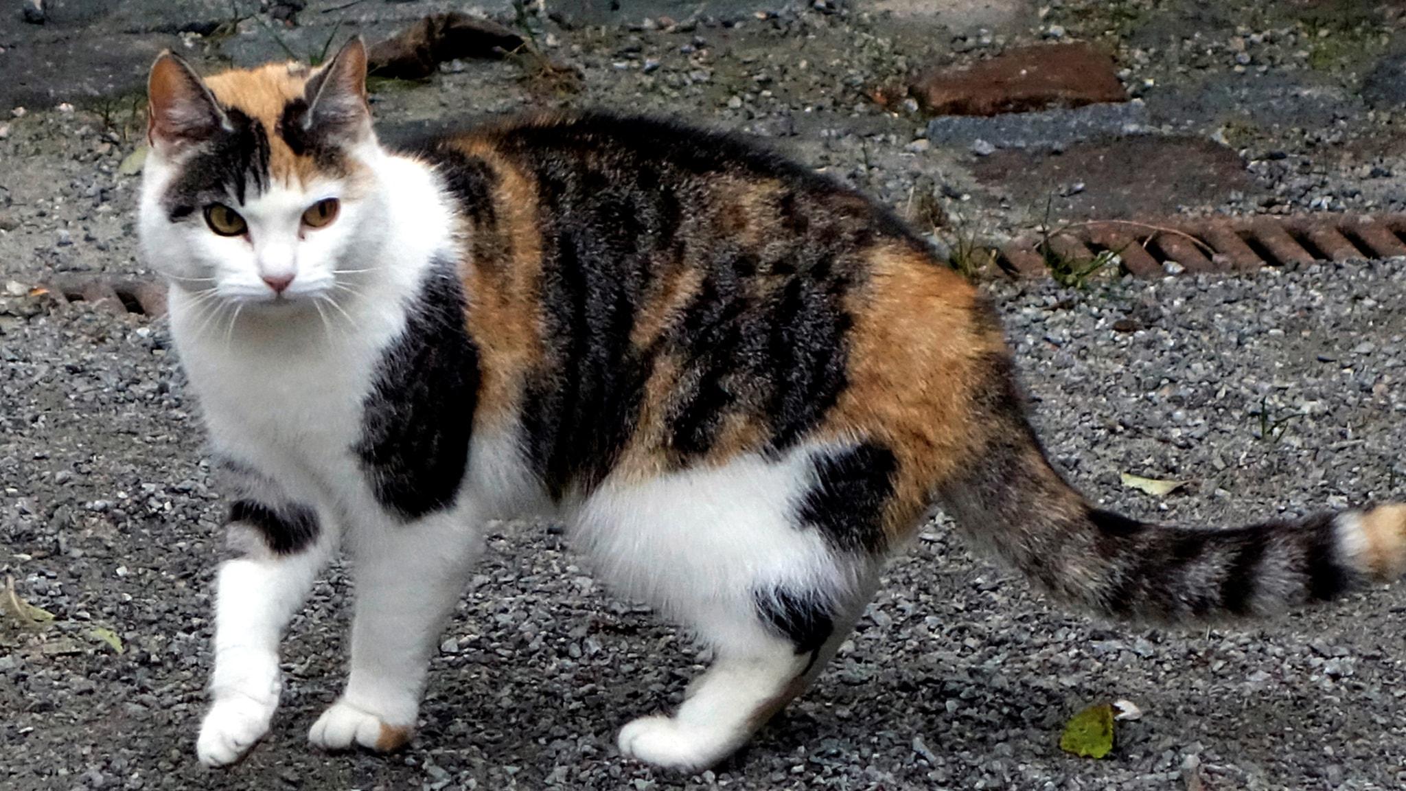 Radetzkymarsch för katten, Tarrodis paradisfåglar och Lundstens Lyckolegend