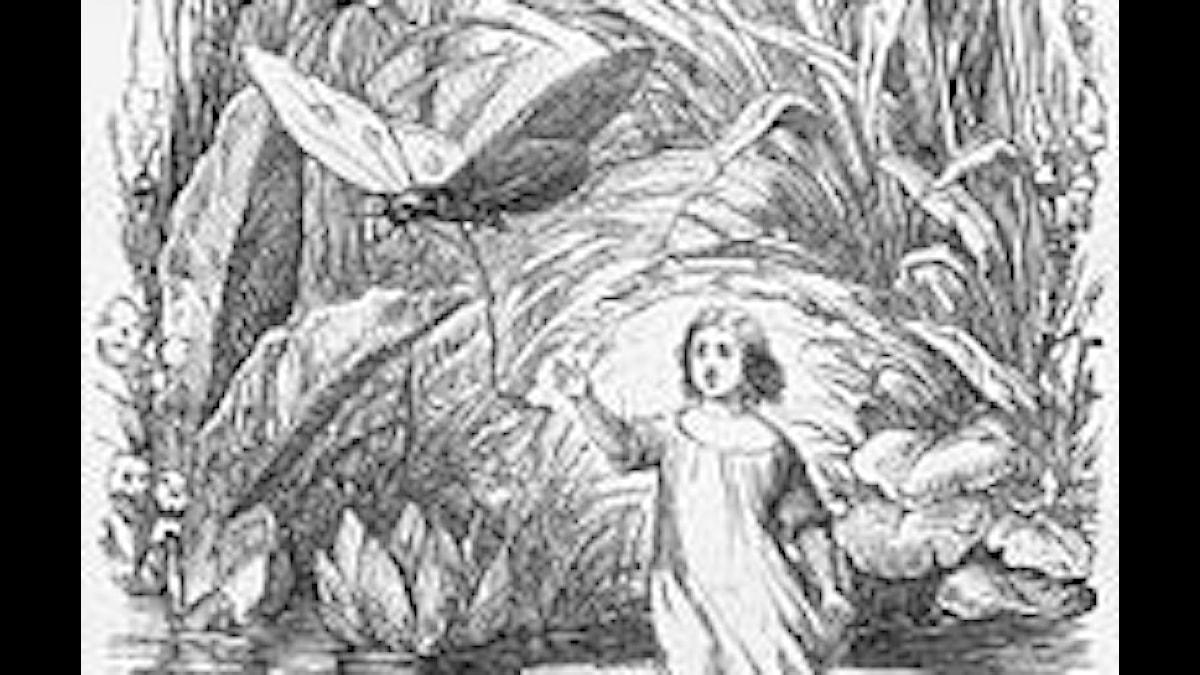 Tummelisa, illustration av Vilhelm Pedersen