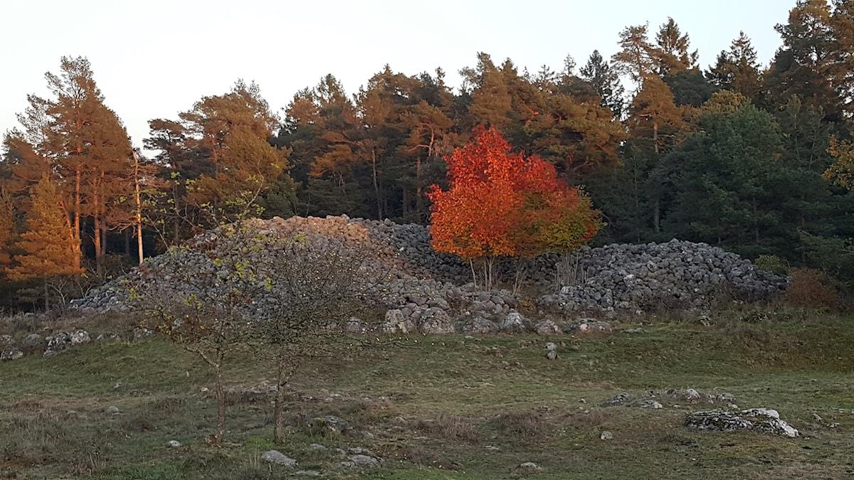 Gålrum i Alskog i oktober