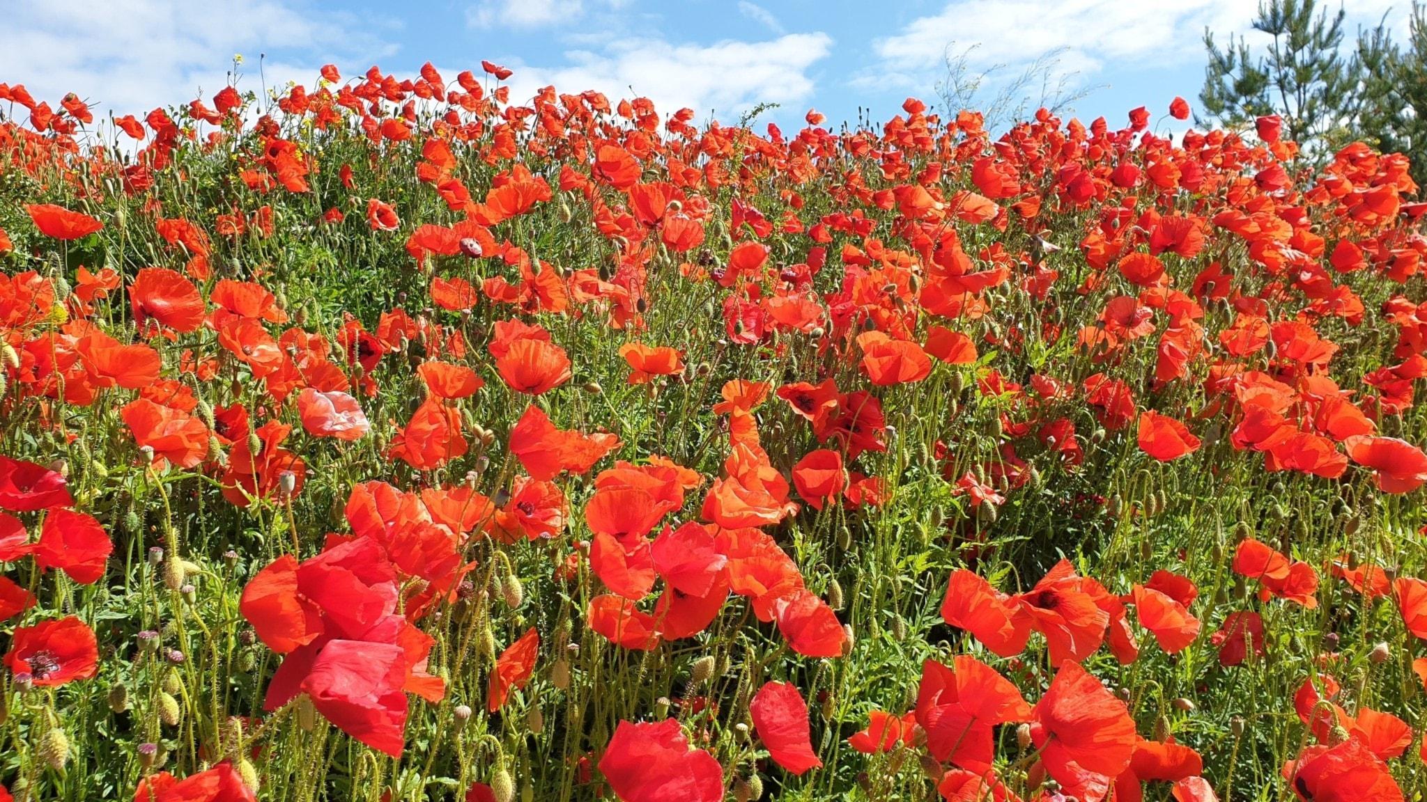 Blommande klang i färg