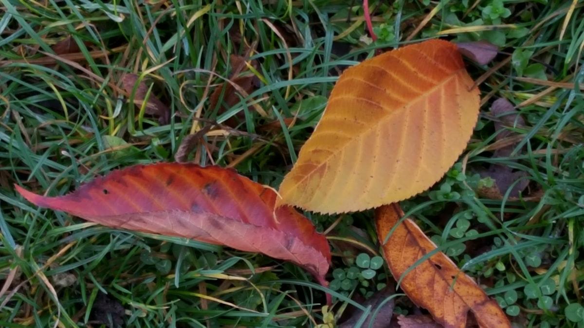 Löv i höstens alla färger