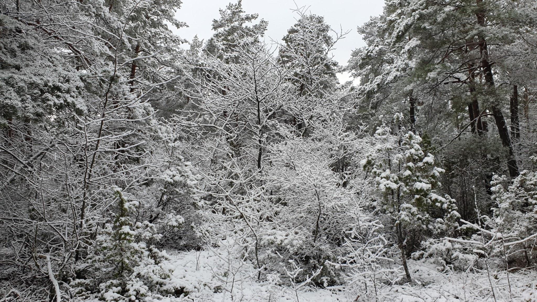 Musik i snöig vinter