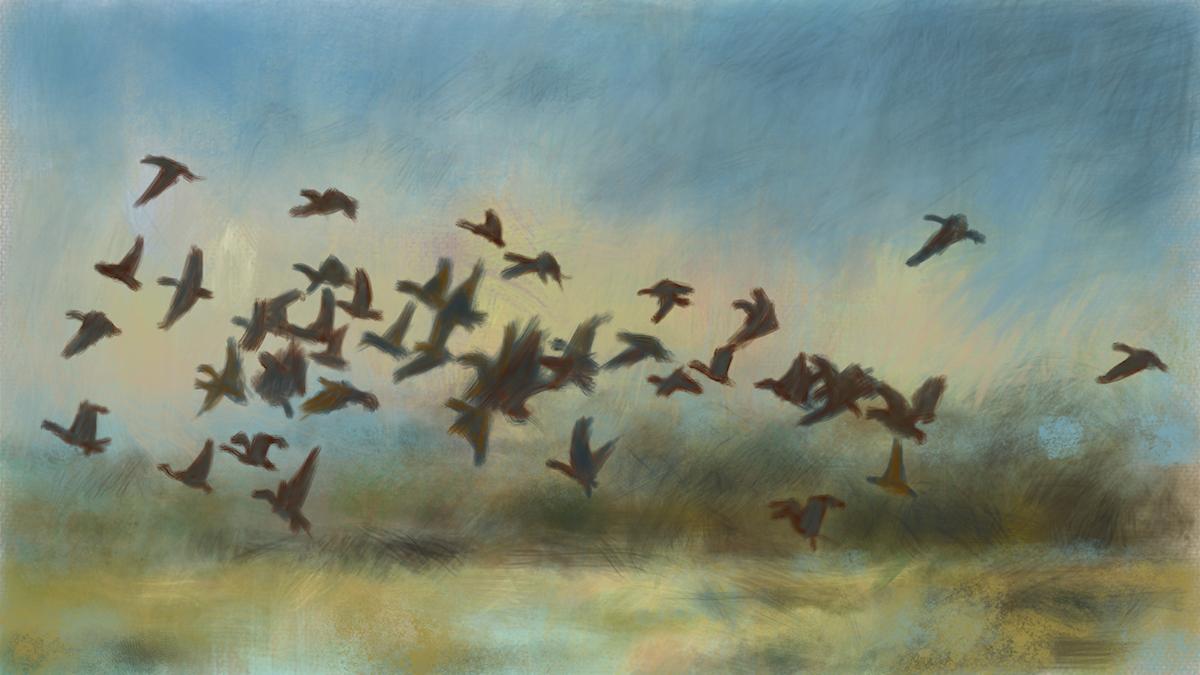 Gryningsfåglar Illustration Mats Ceder