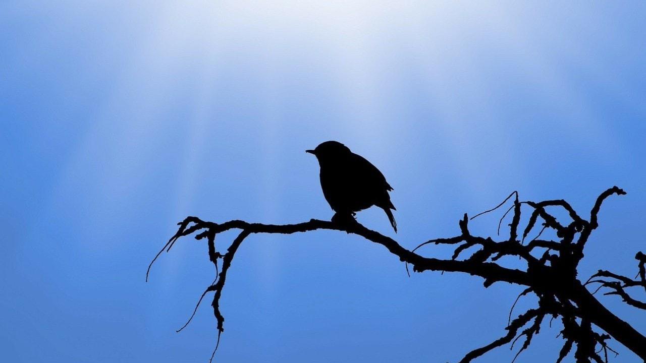 Lycklig fågelfri ton