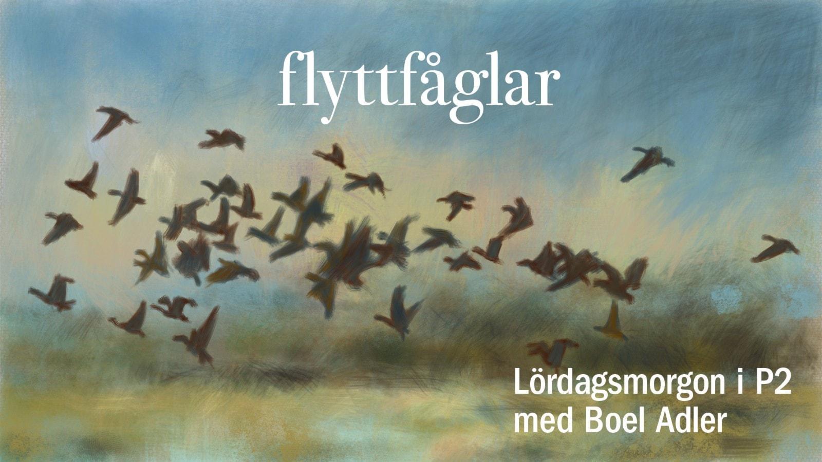 Flyttfågelsmusik