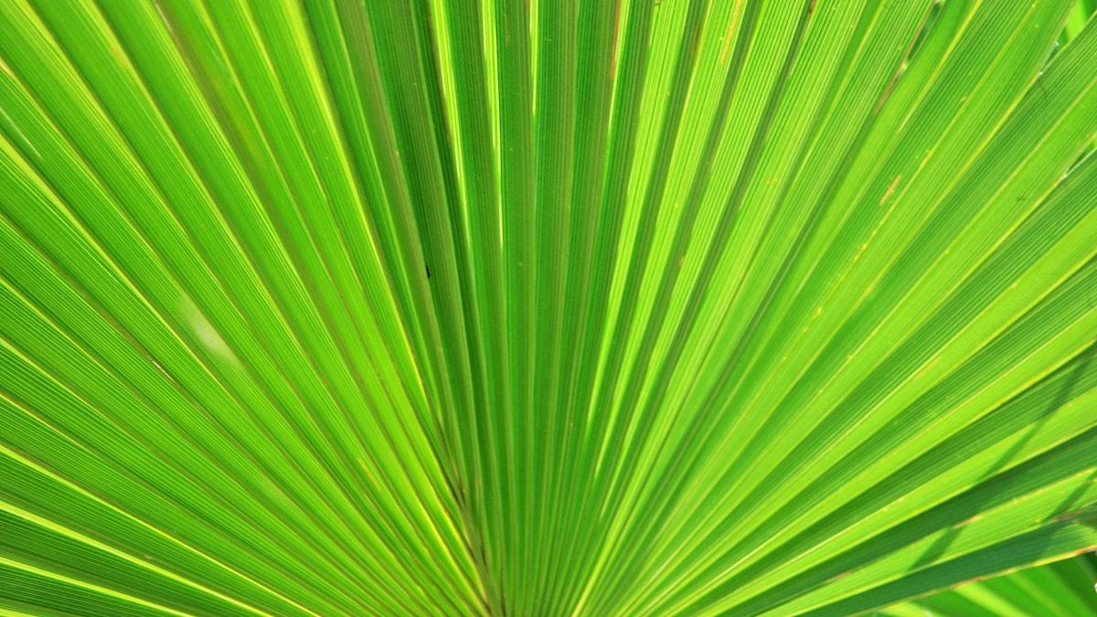 Palmsöndag...