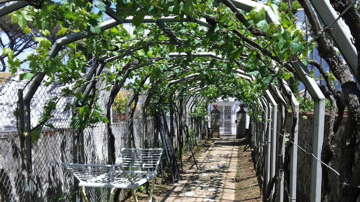 San Micheles inre trädgård