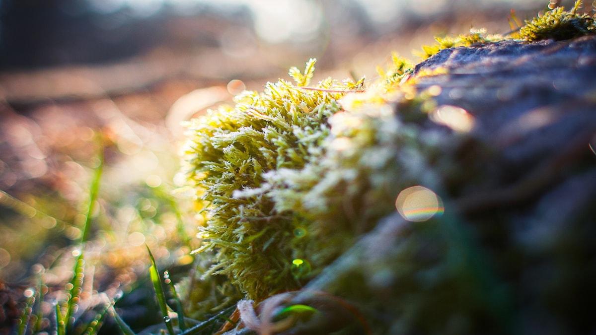Natur i vinter