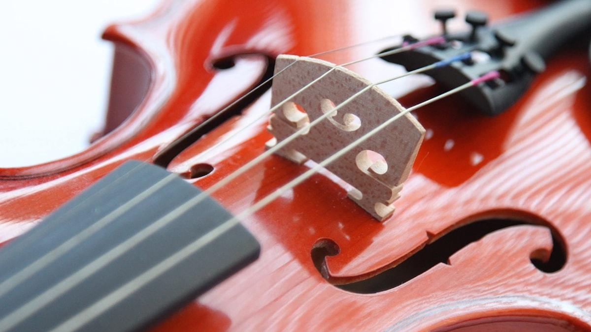Violin - närbild