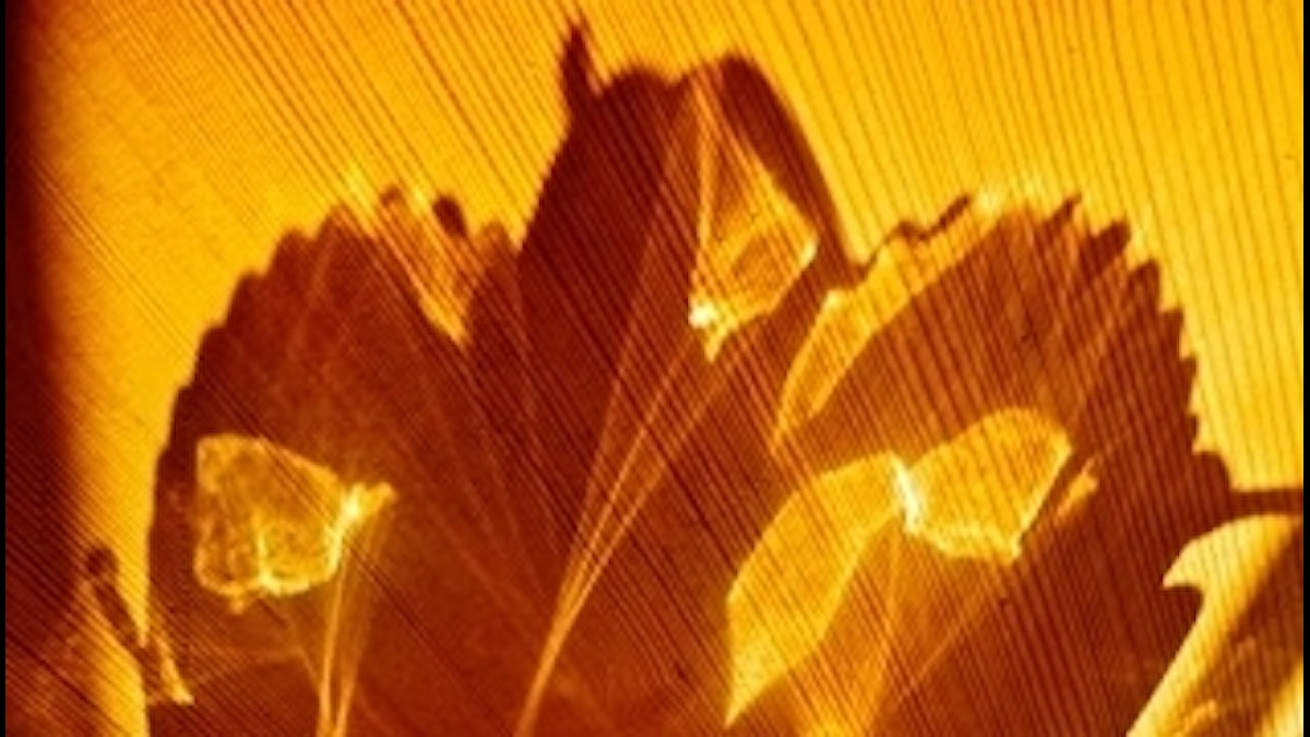 Ljusmask. www.kraxablidvader.blogspot.com