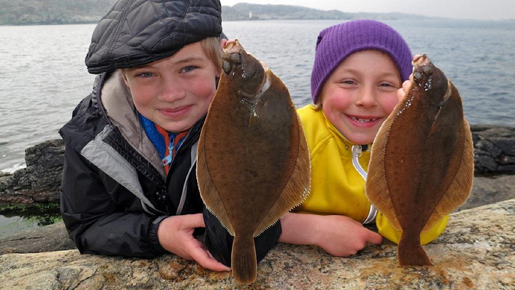 Sandskädda, en plattfisk. Foto: Linda Belanner, Sveriges Radio.
