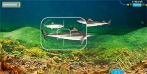 Spela Fisksafari