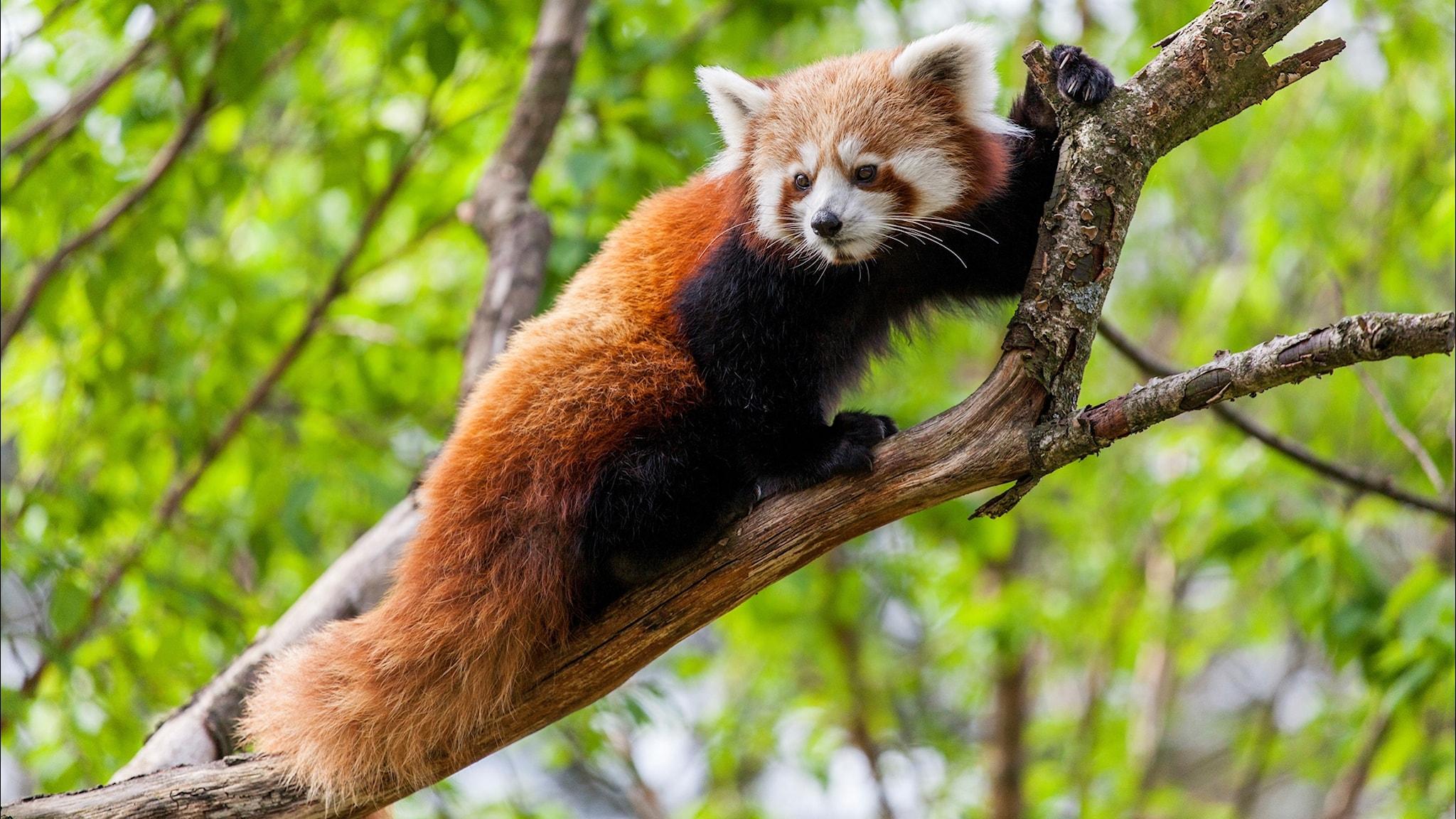 Ny rapport: En miljon arter hotas av utrotning - spela
