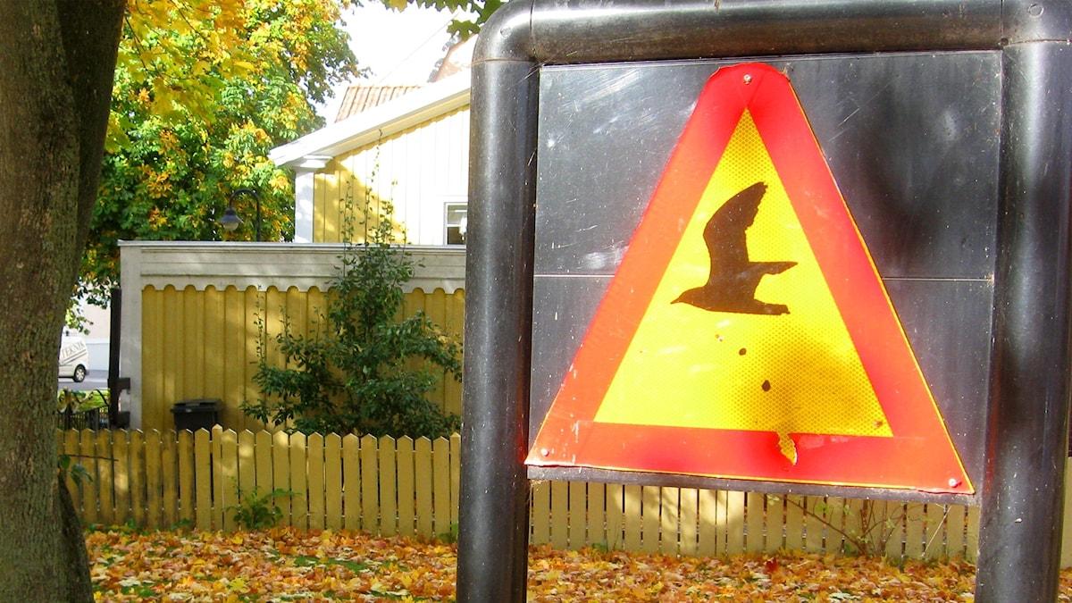Färgspecial med en varningsskylt för fågelskit.