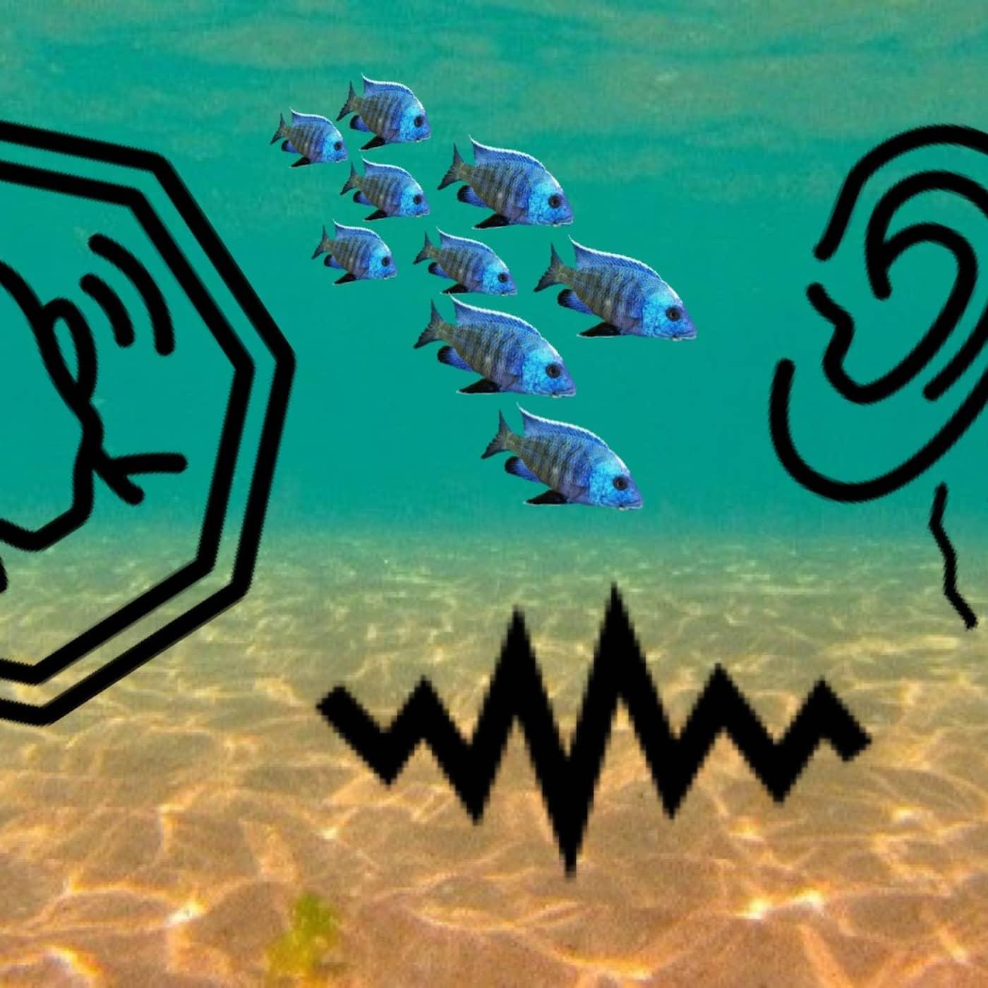 Sjungande sillvalar och bullriga havsdjup!