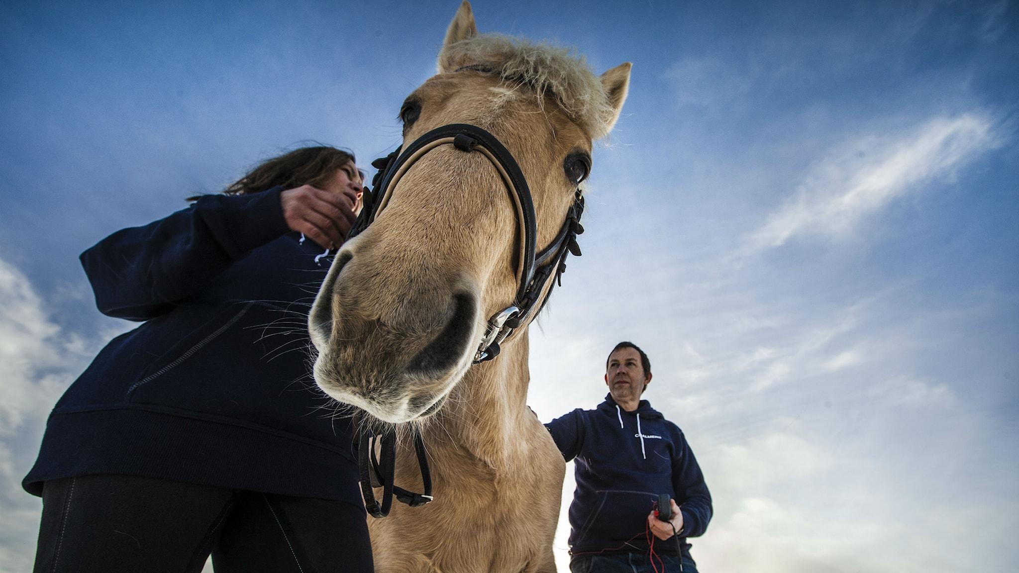 Maria Sundin med hästen Angels Fly High. Foto: Jonas Stenström