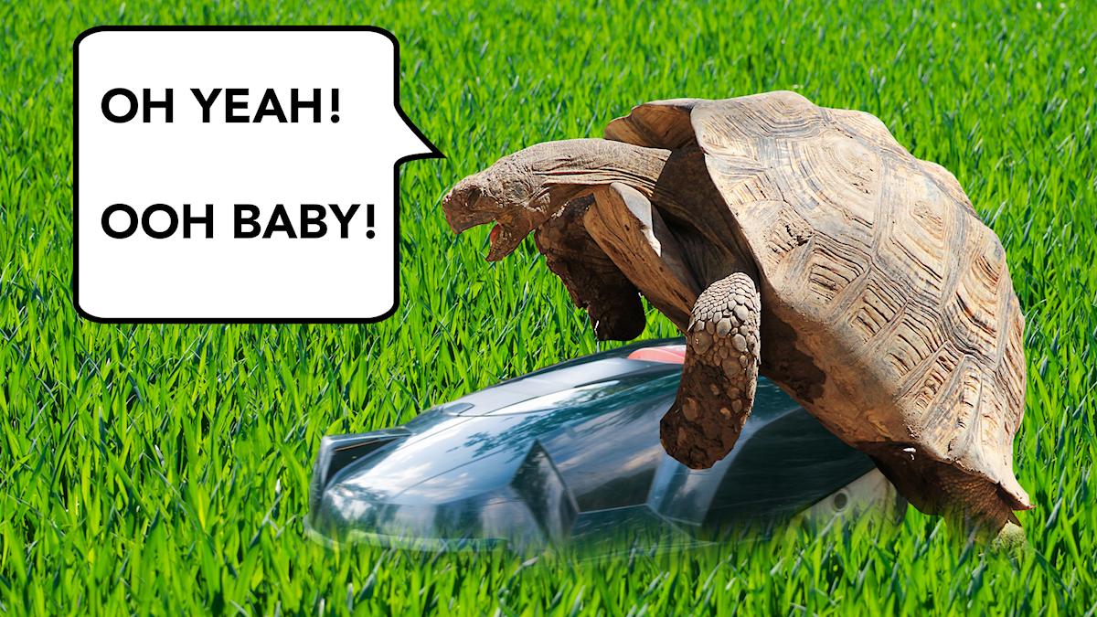Sköldpaddan hade sex med gräsklippare