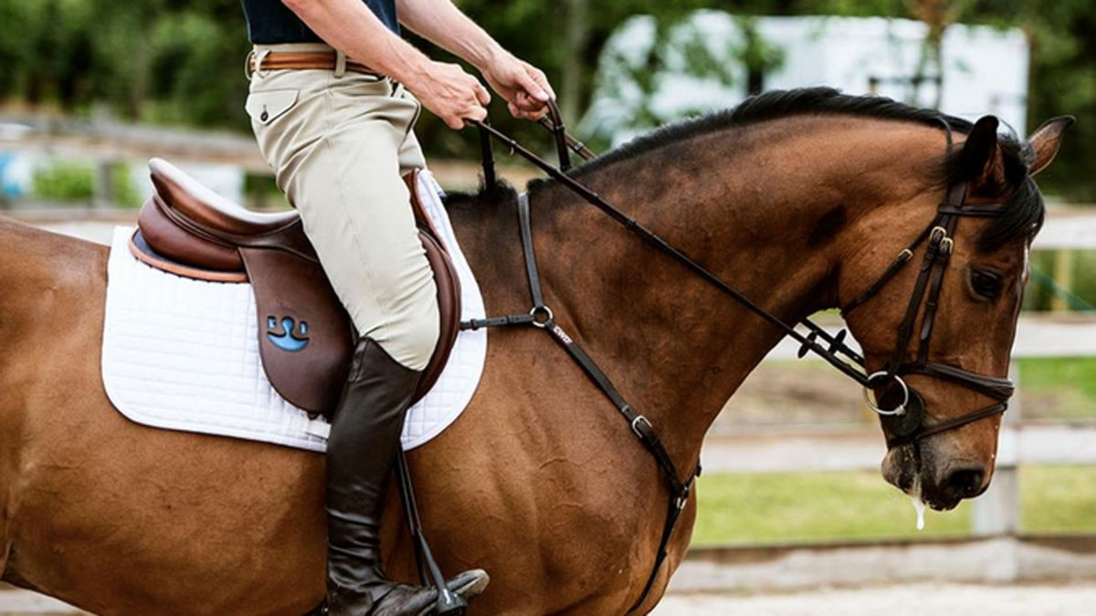 En häst. Foto: Sveriges Radio
