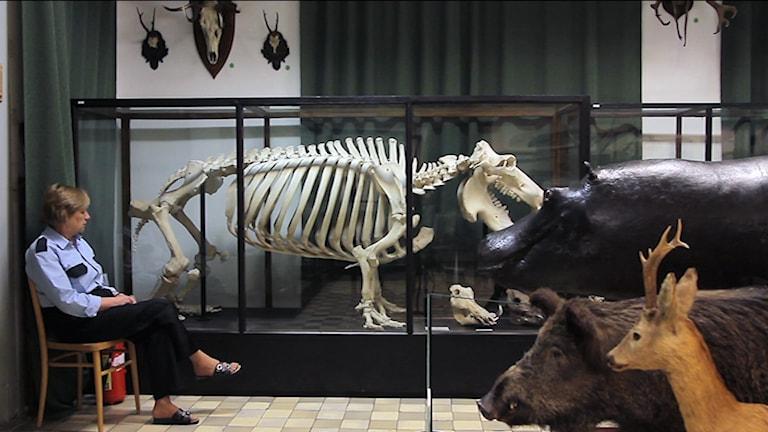 Natural History Museum. Foto: Magda Kulak. Från utställningen Labour in a single shot.