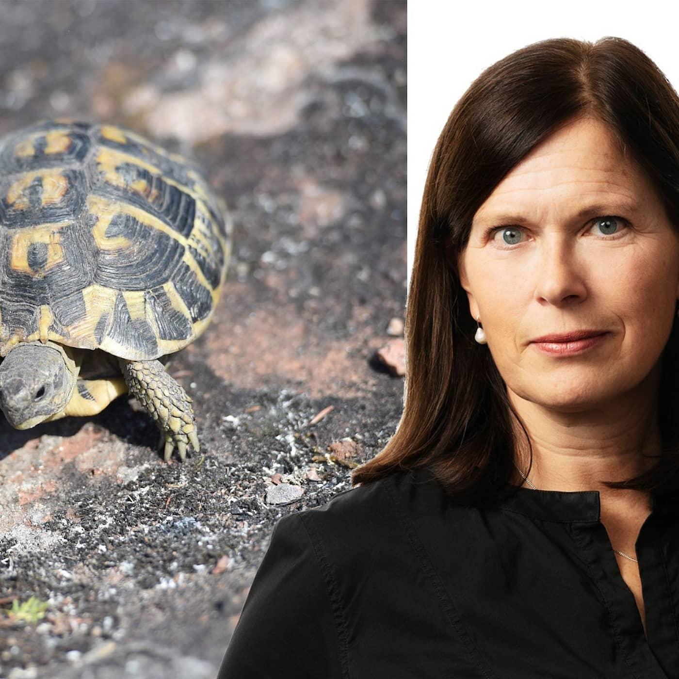 Räddningsaktion för Hermanns sköldpadda: Cecilia Blomberg, Paris