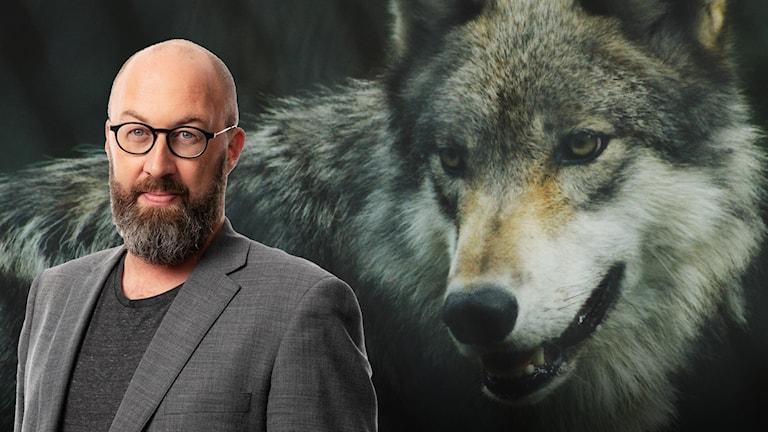 jens möller ulven väcker känslor