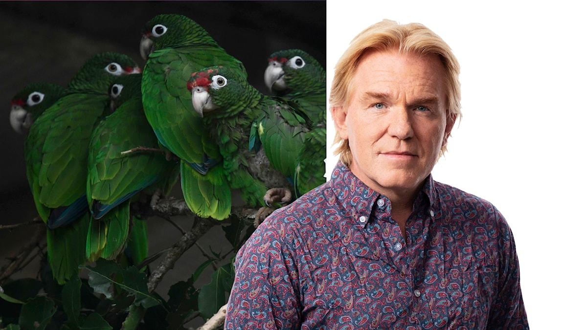 Jesper Lindau med papegojor